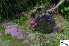 I v létě ledacos kvete